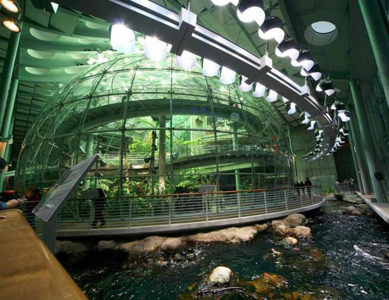 Osher Rainforest at CAS