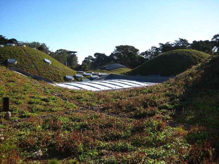 Living Roof at CAS