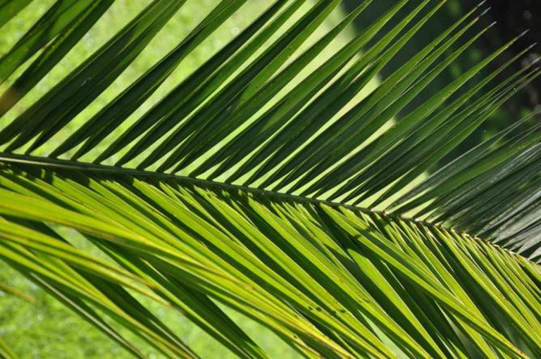 Palm Plant | © momentcaptured1/Flickr