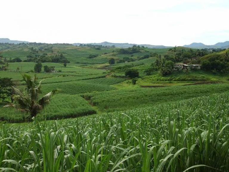Sugarcane Plantations in Fiji