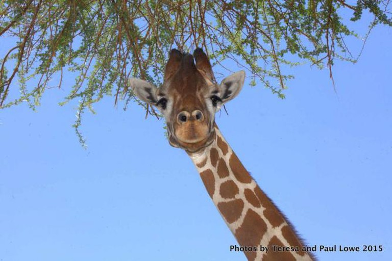 Come see the pose friendly giraffes at The Living Desert!