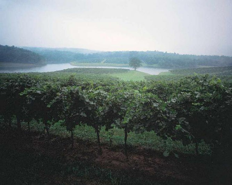 Misty vineyards at the Biltmore | © The Biltmore Company