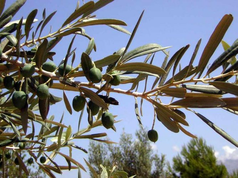 Olives | © Top-tour-of-spain/WikiCommons