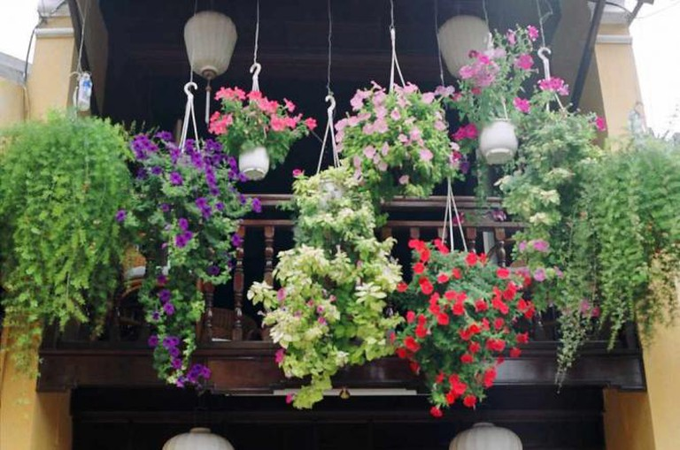 Flower display | © Khánh Hmoong/Flickr