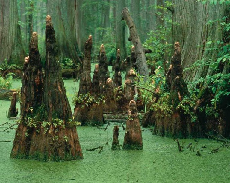 The Green Swamp | Courtesy of WikiCommons