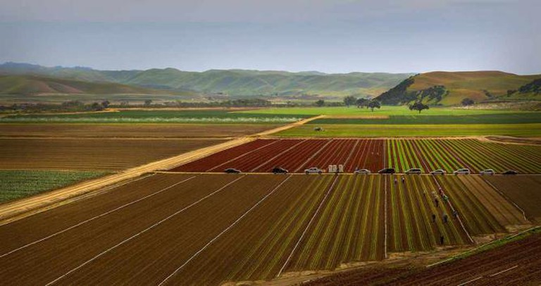 Fields of red and green lettuce in California