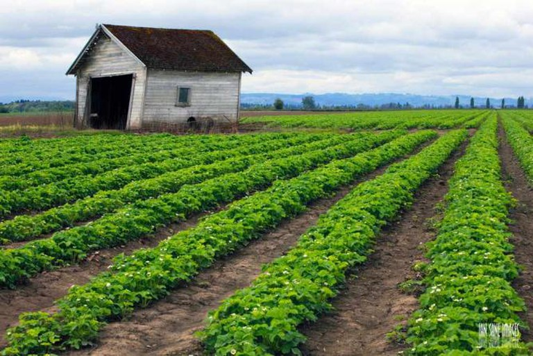 Farm landscape in Oregon