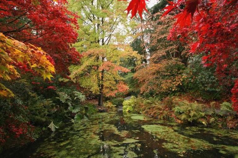 Woodland Garden at Washington Park Arboretum