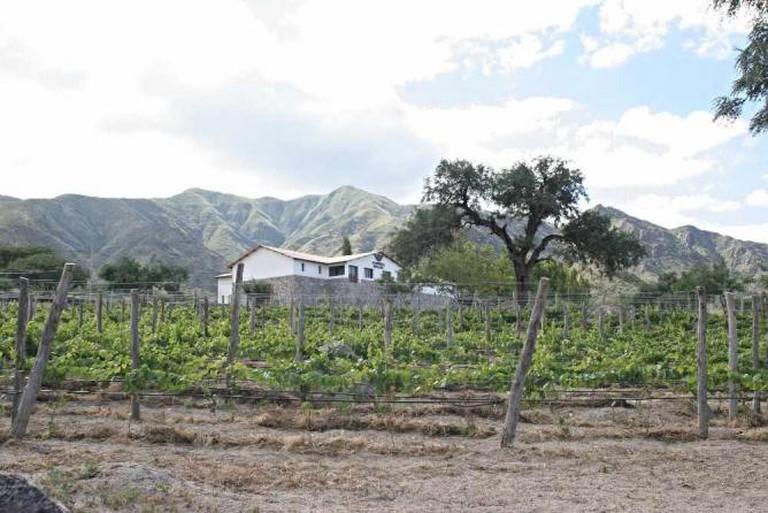 Bodega Domingo Molina | Image courtesy of Bodega Domingo Molina