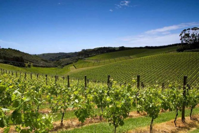 Cable Bay Vineyard | © Chris Gin/Flickr