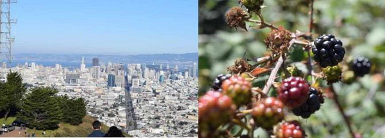 Twin Peaks Summit & Blackberries / Courtesy Ian Hill