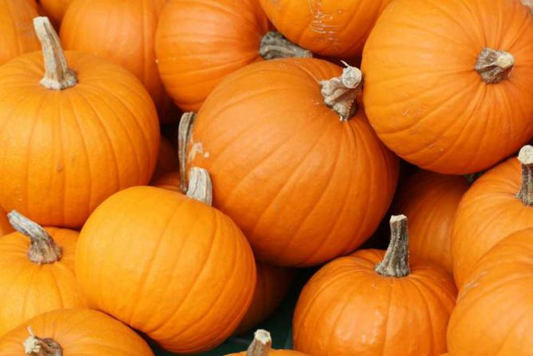 Pumpkins | © Danielle Scott/Flickr