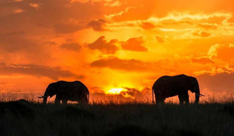 Masai Mara National Reserve sunset