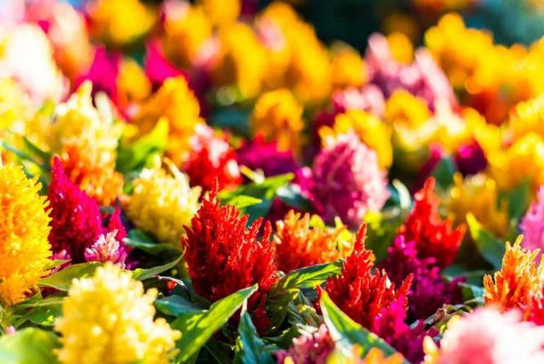 Flowers | © AllieKF/Flickr