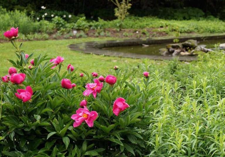 Linz Botanical Garden | © GardenTraveller/Flickr