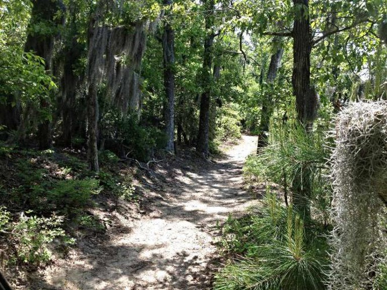 Trail at First Landing State Park