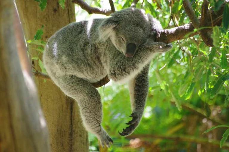 Taronga Zoo | © Pelican/Flickr