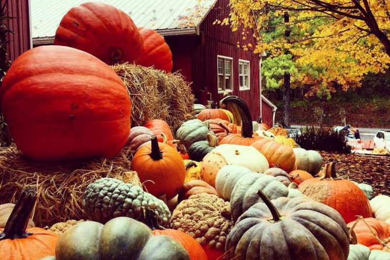 Pumpkins and Squash | Courtesy of Butler's Orchard