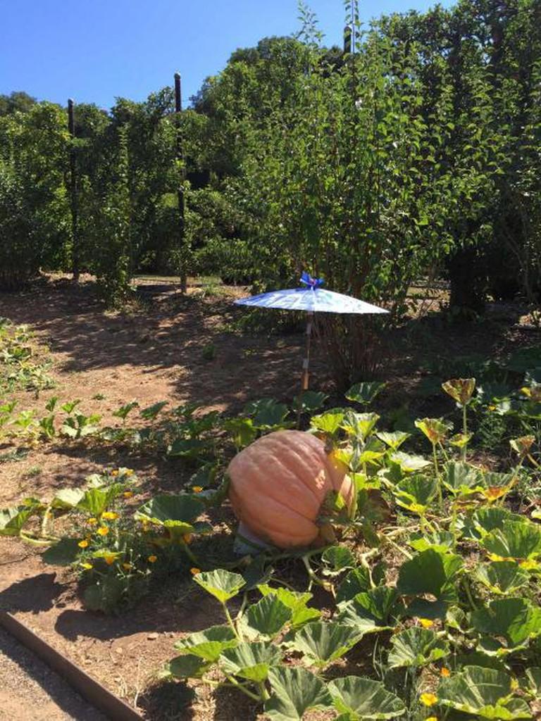 Pumpkin | © Michelle Sarmenta