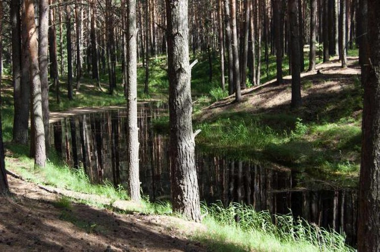 A Siberian forest