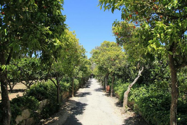 Buskett Gardens, Triq il-Buskett in Siġġiewi, Malta