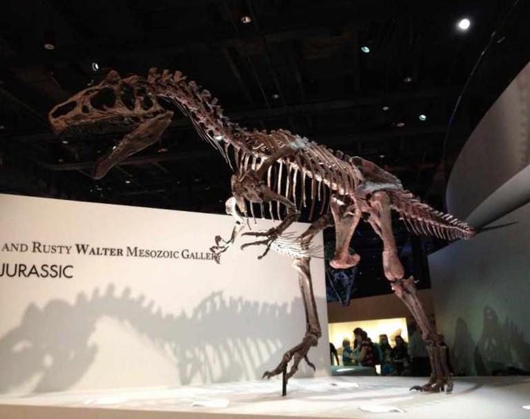 T-Rex in the Mesozoic Gallery | © Samantha Beckett