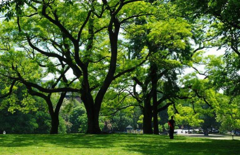 Fort Greene Park | © Francisco Daum/Flickr