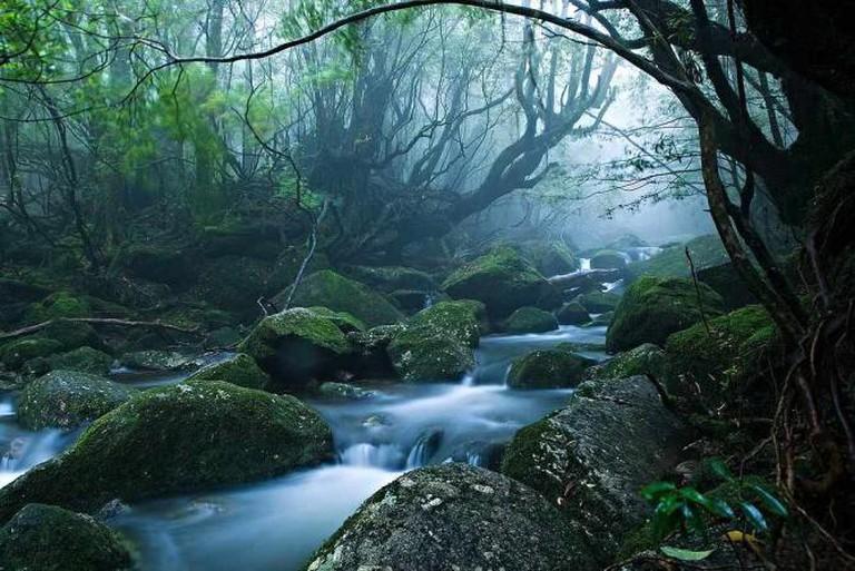 Yakushima | © Casey Yee/Flickr