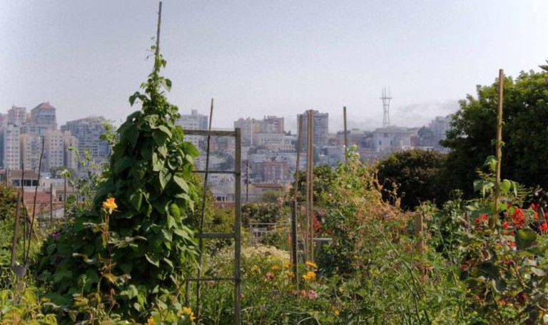 Fort Mason Community Garden, San Francisco