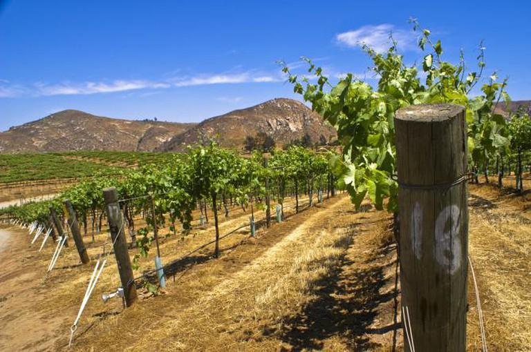 San Pasqual vineyard | © Paul Vladuchick/Flickr