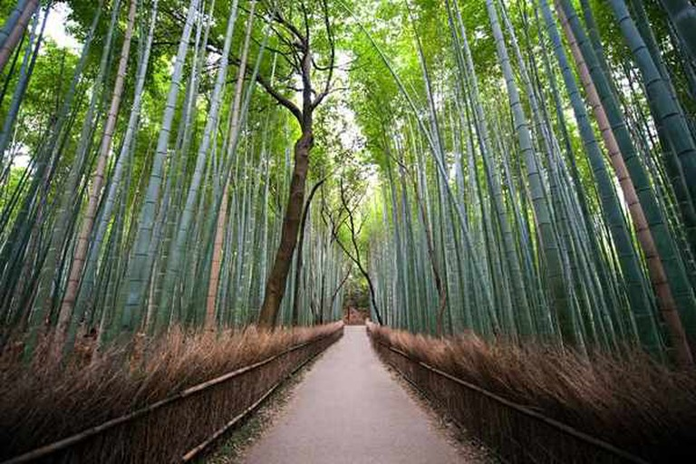 Japanese bamboo, as captured by Navid Baraty