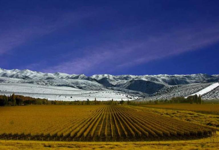 Mendoza vineyards © Flickr