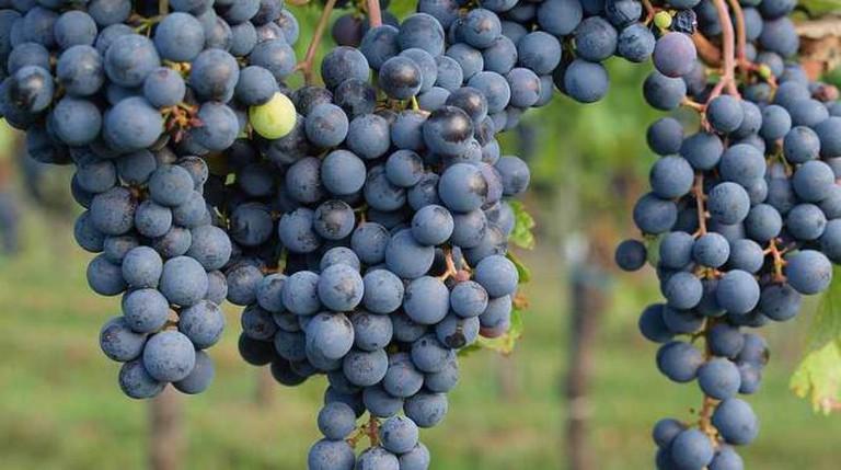 Grapes | © RobertoVerzo/Flickr