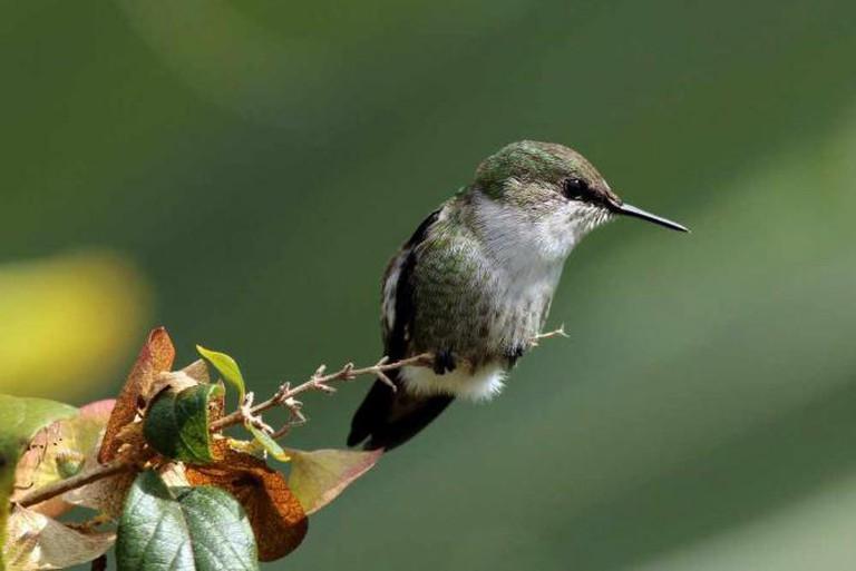 A Birder's Paradise | ©Wikimedia