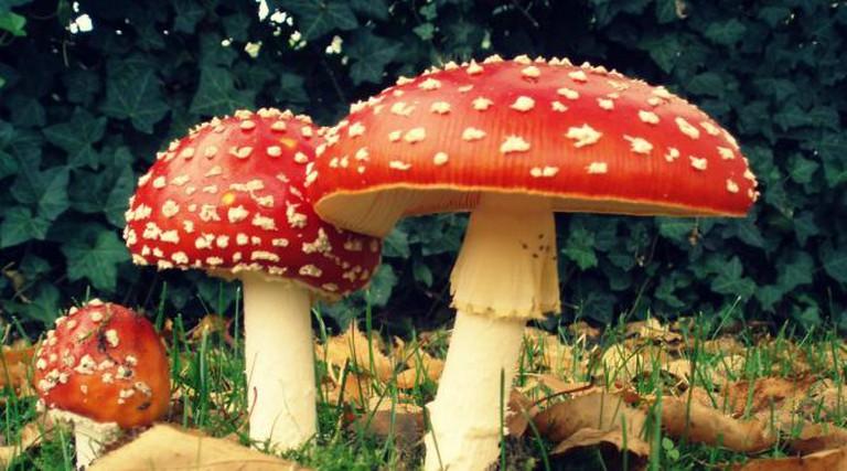 Glückspilz | © Onderwijsgek/WikiCommons