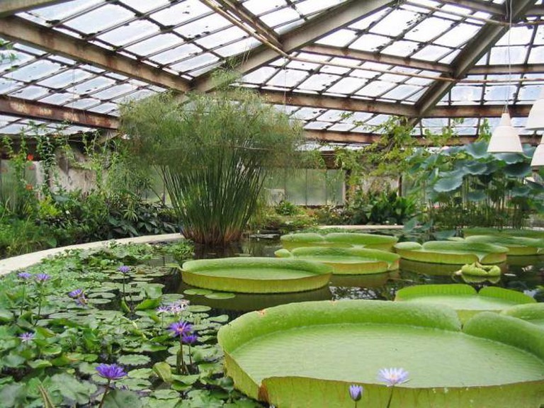 Botanical Garden of St Petersburg, Conservatory of aquatic plants © Vladimir Ivanov/WikiCommons