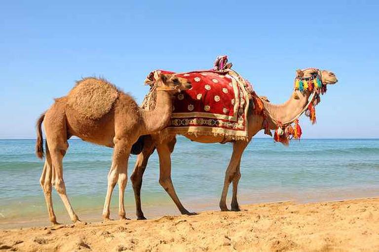 Sfax Beach