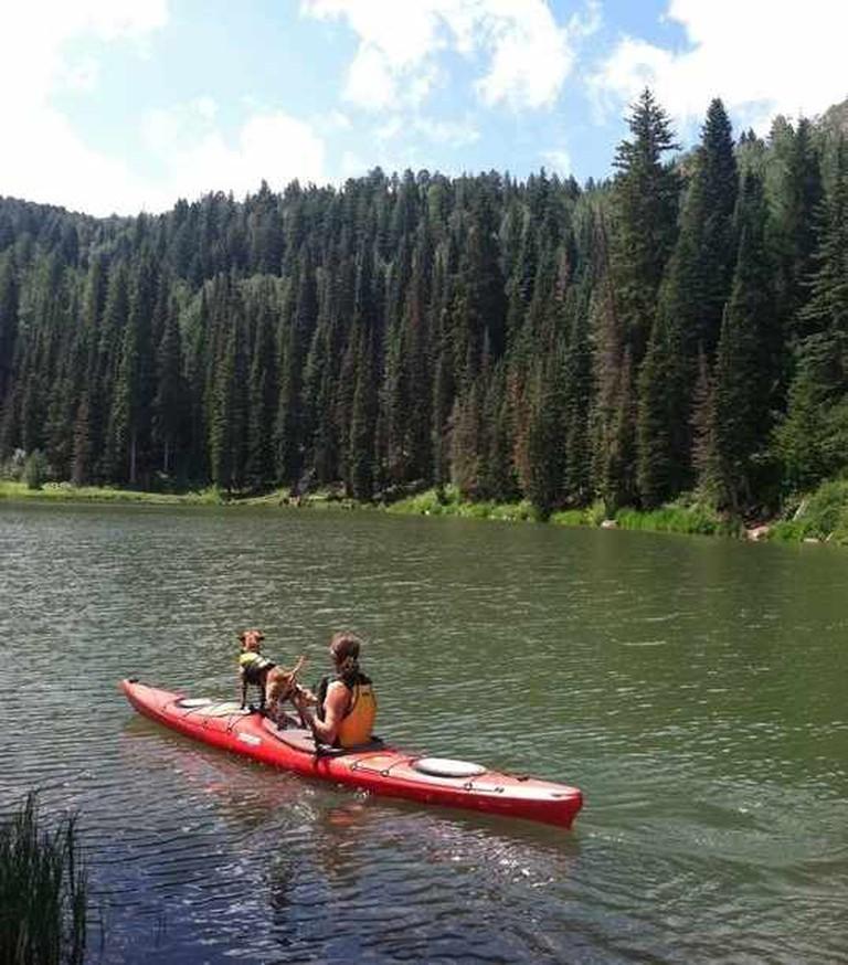 Paddledog Kayak Tours