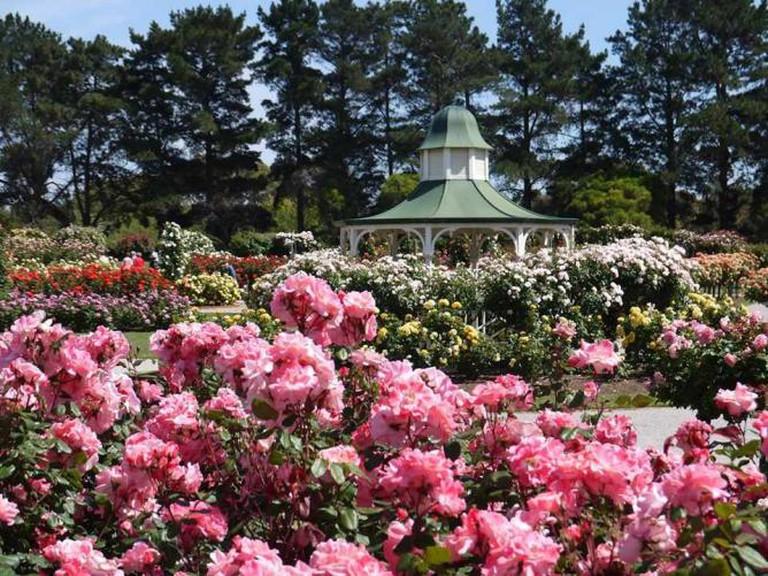 Victoria State Rose Garden | © Christine Menegazzo