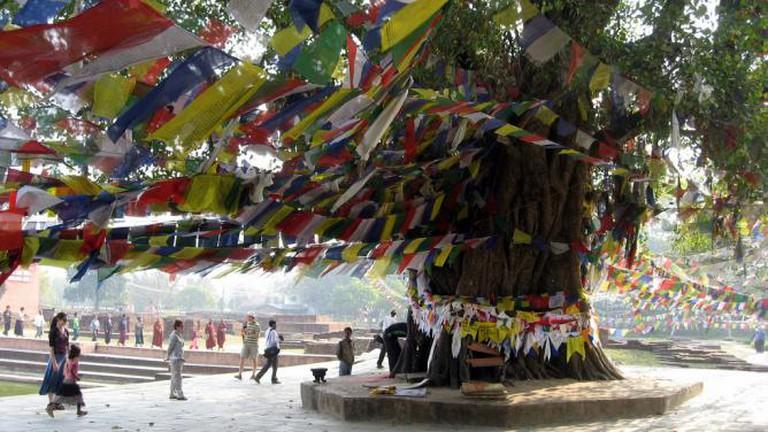 Lumbini Tree © wonker/Flickr