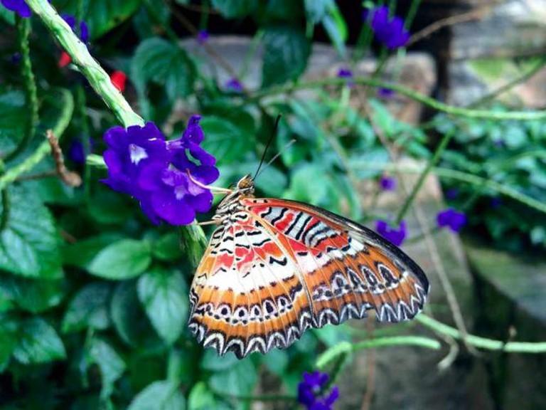 Butterfly Convervatory | © Arijit Nag