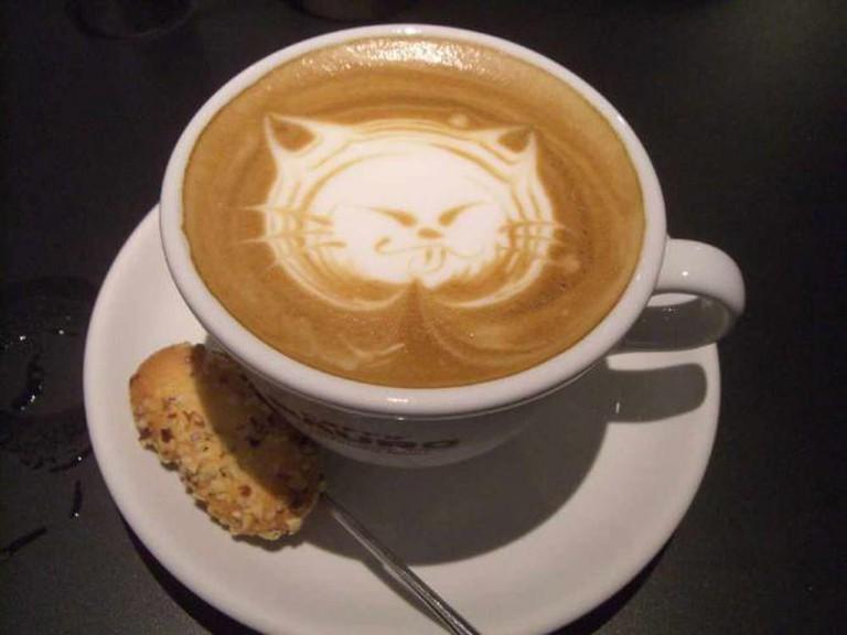 Cat cappucino | © akaitori/Flickr