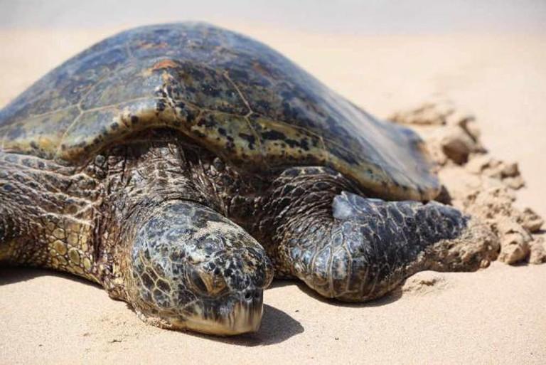 Turtle © Aaron Goodman/Flickr