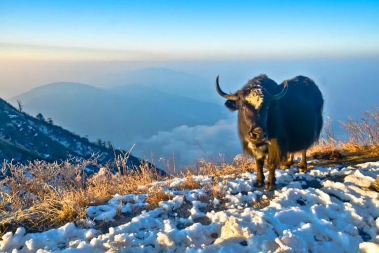 Sikkim Diaries   © Diptangshu Hazra VIII