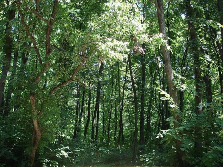 Forest in Ialoveni County, Moldova | © Zserghei/Wikicommons