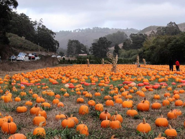 Pumpkin Patch | © Michelle Sarmenta