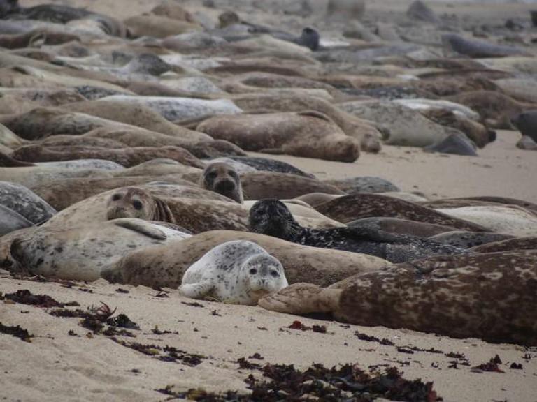 Fitzgerald Marine Reserve Seals | © Luis Sarmenta