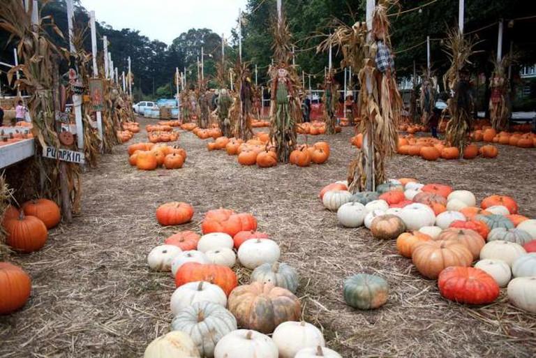 Pumpkin Patch | © Matt Baume/Flickr