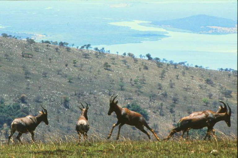 View of Akagera National Park in 1980