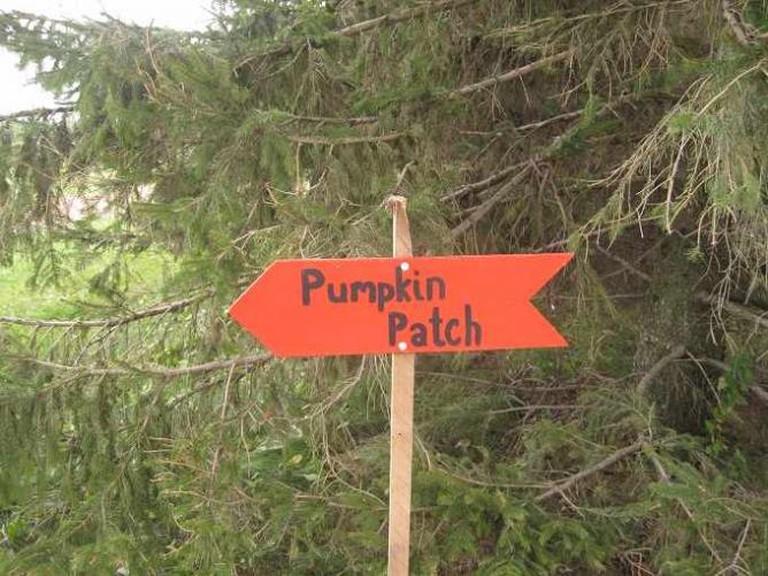 Pumpkin Patch | © Carolina Antunes